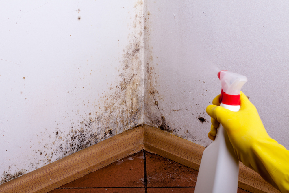 Why Mold Removal and Prevention is So Important